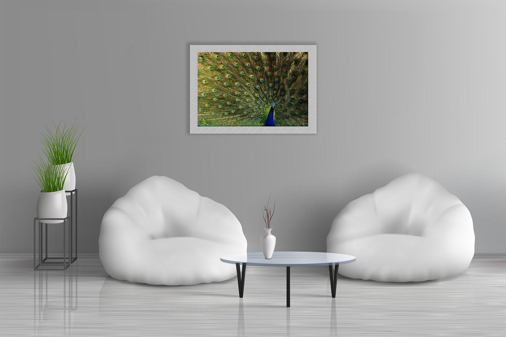 Indian peafowl by Abhilash Kar